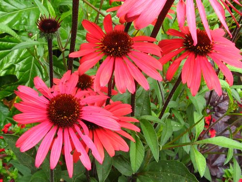 The Garden 8.19.12_002