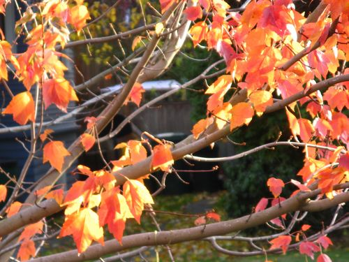 The Last Leaves of Autumn 11.20.11_005