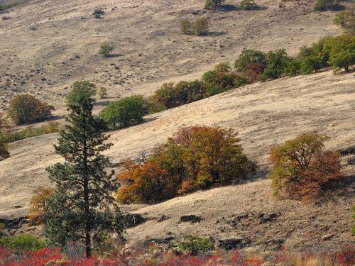 73b October Stratovolcano Loop 10.19-21.14_030